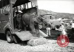 Image of elephant New York United States USA, 1958, second 8 stock footage video 65675058264