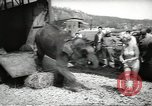 Image of elephant New York United States USA, 1958, second 9 stock footage video 65675058264