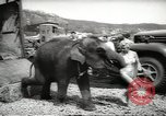 Image of elephant New York United States USA, 1958, second 10 stock footage video 65675058264