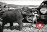 Image of elephant New York United States USA, 1958, second 11 stock footage video 65675058264