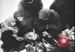 Image of German atrocities against Soviet citizens Soviet Union, 1943, second 9 stock footage video 65675058272