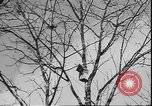 Image of Spring in Leningrad following Siege by Germany Leningrad Russia Soviet Union, 1943, second 9 stock footage video 65675058278