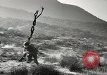 Image of American infantry Pacific Theater, 1943, second 6 stock footage video 65675058464