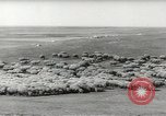 Image of flock of sheep Alberta Canada, 1943, second 9 stock footage video 65675058480