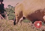 Image of Cattle pull a plow Puerto Rico, 1941, second 11 stock footage video 65675058641