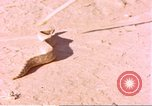 Image of snake Sub Saharan Africa, 1958, second 5 stock footage video 65675058728