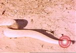 Image of snake Sub Saharan Africa, 1958, second 12 stock footage video 65675058728