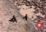 Image of monkeys Sub Saharan Africa, 1958, second 7 stock footage video 65675058729