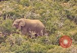 Image of elephant Sub Saharan Africa, 1958, second 3 stock footage video 65675058731
