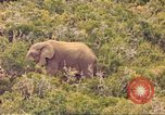 Image of elephant Sub Saharan Africa, 1958, second 5 stock footage video 65675058731