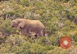 Image of elephant Sub Saharan Africa, 1958, second 6 stock footage video 65675058731