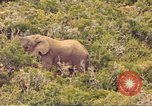 Image of elephant Sub Saharan Africa, 1958, second 7 stock footage video 65675058731