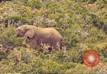 Image of elephant Sub Saharan Africa, 1958, second 9 stock footage video 65675058731