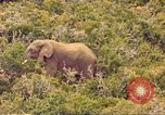 Image of elephant Sub Saharan Africa, 1958, second 10 stock footage video 65675058731