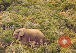 Image of elephant Sub Saharan Africa, 1958, second 12 stock footage video 65675058731