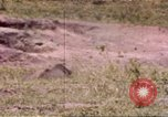 Image of Rhinoceros Sub Saharan Africa, 1958, second 1 stock footage video 65675058732