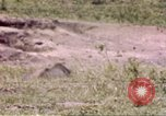 Image of Rhinoceros Sub Saharan Africa, 1958, second 2 stock footage video 65675058732
