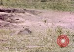 Image of Rhinoceros Sub Saharan Africa, 1958, second 3 stock footage video 65675058732