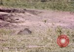 Image of Rhinoceros Sub Saharan Africa, 1958, second 4 stock footage video 65675058732