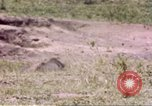 Image of Rhinoceros Sub Saharan Africa, 1958, second 5 stock footage video 65675058732