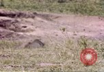 Image of Rhinoceros Sub Saharan Africa, 1958, second 6 stock footage video 65675058732