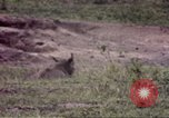 Image of Rhinoceros Sub Saharan Africa, 1958, second 8 stock footage video 65675058732