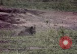 Image of Rhinoceros Sub Saharan Africa, 1958, second 9 stock footage video 65675058732