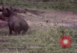 Image of Rhinoceros Sub Saharan Africa, 1958, second 11 stock footage video 65675058732