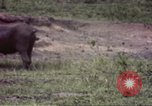Image of Rhinoceros Sub Saharan Africa, 1958, second 12 stock footage video 65675058732