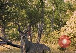 Image of gazelles Sub Saharan Africa, 1958, second 1 stock footage video 65675058734
