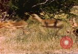 Image of gazelles Sub Saharan Africa, 1958, second 1 stock footage video 65675058735