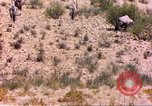 Image of gazelles Sub Saharan Africa, 1958, second 6 stock footage video 65675058736