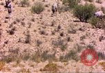 Image of gazelles Sub Saharan Africa, 1958, second 8 stock footage video 65675058736