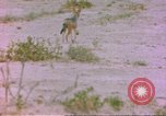 Image of spotted hyena Sub Saharan Africa, 1958, second 1 stock footage video 65675058740