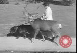 Image of a deer Los Angeles California USA, 1935, second 3 stock footage video 65675058979