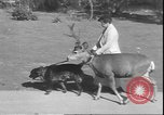 Image of a deer Los Angeles California USA, 1935, second 4 stock footage video 65675058979