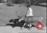 Image of a deer Los Angeles California USA, 1935, second 5 stock footage video 65675058979