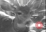 Image of a deer Los Angeles California USA, 1935, second 12 stock footage video 65675058979