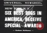 Image of French poodle New York United States USA, 1939, second 4 stock footage video 65675059008