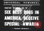 Image of French poodle New York United States USA, 1939, second 6 stock footage video 65675059008