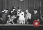 Image of French poodle New York United States USA, 1939, second 7 stock footage video 65675059008