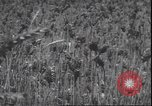 Image of wheat harvesting Washington State United States USA, 1943, second 12 stock footage video 65675059036