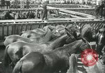 Image of auction of horses Los Angeles California USA, 1944, second 5 stock footage video 65675059353
