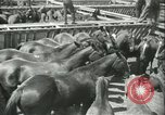 Image of auction of horses Los Angeles California USA, 1944, second 6 stock footage video 65675059353