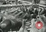 Image of auction of horses Los Angeles California USA, 1944, second 7 stock footage video 65675059353