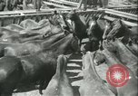 Image of auction of horses Los Angeles California USA, 1944, second 8 stock footage video 65675059353