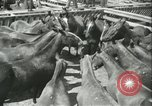 Image of auction of horses Los Angeles California USA, 1944, second 9 stock footage video 65675059353