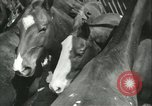 Image of auction of horses Los Angeles California USA, 1944, second 11 stock footage video 65675059353