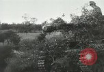 Image of Allied paratroopers France, 1944, second 1 stock footage video 65675059372