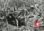 Image of British soldiers Anzio Italy, 1944, second 4 stock footage video 65675059386